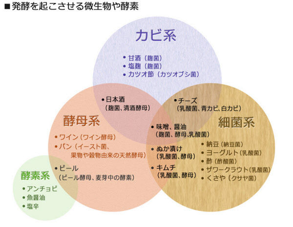 菌活-発酵食品