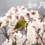【2月・如月】旬のモノに症状別食材をプラス!春を迎える自然のエネルギー