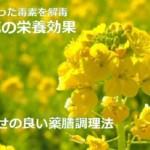 菜の花の栄養効果と冬に溜まった毒を解毒!食べ合せの良い薬膳調理法