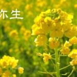 【3月・弥生】旬のモノの苦味は心身ともに活動を始める食材!