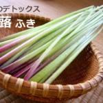 蕗(ふき)の栄養と春のデトックス効果!薬膳的効能がスゴイ