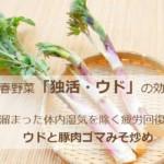 春野菜「ウド」冬に溜まった毒素を出し疲労回復!ウドと豚肉ゴマみそ炒め