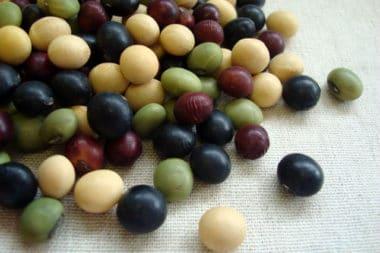 【豆類】「畑の肉」の栄養効能!解毒のお薬とされる薬効