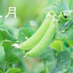 【5月・皐月】旬のモノに症状別食材をプラス!肝機能を高め心を整える
