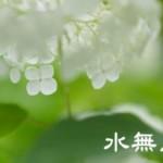 【6月・水無月】旬の食材を生かして、胃を休めて夏に耐えられる体の対策!