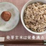 発芽玄米は栄養満点!簡単な自家製レシピ!加工商品は保存・殺菌されている