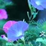 【7月・文月】梅雨と初夏を乗り切る食材「夏バテ対策」を考えよう