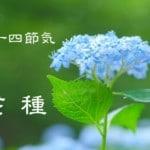 二十四節気の夏【芒種-ぼうしゅ】6/6~6/20頃:体の湿気に注意!