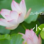 二十四節気の夏【小暑-しょうしょ】7/7~22頃:水毒のむくみ対策食材と筋力低下の運動