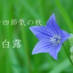 二十四節気の秋【白露-はくろ】9/8~9/22頃:センチメンタルになる季節!