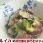 春が旬の一物全体食「ホタルイカ」驚く7つの栄養効果!ボイルのレシピ